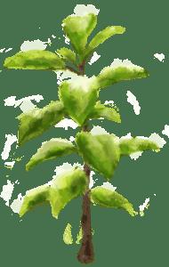 成長する木